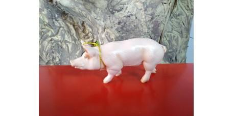 PAPO - Porco