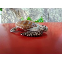 PAPO - Tartaruga do Mar