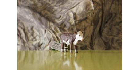 Cria de Vaca Hereford