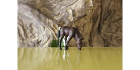 Cria de Cavalo Árabe