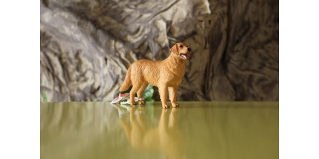 Cão Golden Retriver