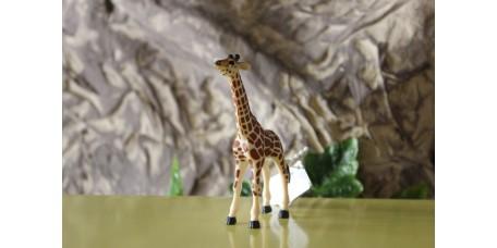 Cria de Girafa