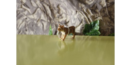 Cria de Tigre de Bengala