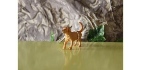 Cria de Cão Golden Retriver